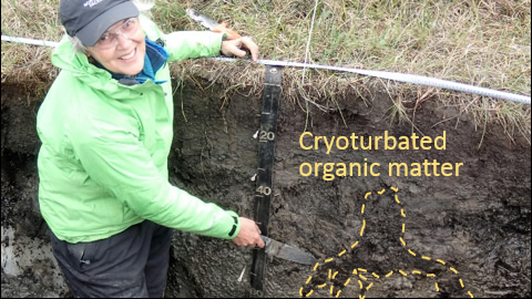 Photo of permafrost-region soil with cryoturbated organic matter highlighted